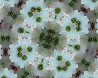 Dogwood blossom photograph, dogwood blossom image, dogwood blossom home decor