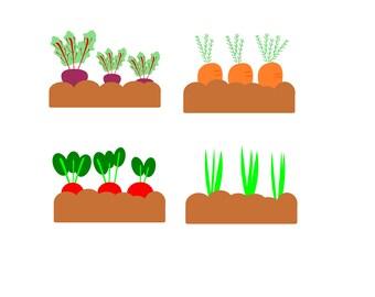 Root vegetable clipart/Vegetable clipart/Veggie clipart