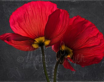 Floral Art. Fine Art Photography. Large Canvas Wrap. Red. Vibrant. Poppies. Botanical Print. Wall Art. Home and Office decor.