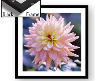 "Newport Black Framed 15.5 x 15.5 or 19.5 x 19.5 ""Pink Dahlia"" Wall Decor"