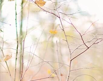 I heart fall autumn -pastel fall - fall photography - autumn decor - autumn photo - Original fine art photography prints - FREE Shipping