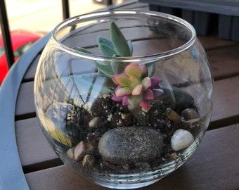 Fishbowl Succulent Terrarium