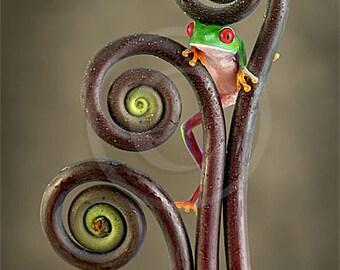 Fern Curls, Fiddleheads, Baby Tree Frog, Wall Art