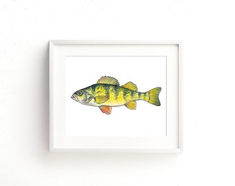 Yellow Perch Watercolor Fine Art Print