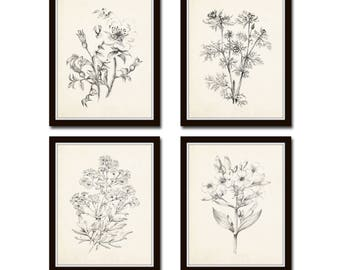 Vintage Botanical Sketch Prints Set No. 2, Botanical Prints, Giclee, Art Print, Vintage  Botanicals, Illustration, Flower Prints, Flower Art