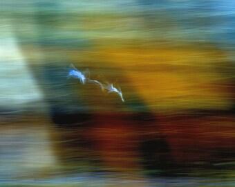 Photo Image Nature Seagulls River