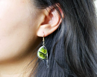 Real Butterfly earrings/ Arcas imperialis Peru/ Real preserved laminated resining Butterfly Ear Dangles/ rainforest metallic green