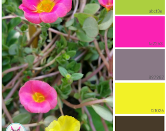 Custom Color Palette generated as a pdf, color match, custom image, print