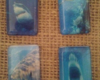 Shark Magnet Set - Shark Week Magnets - Great White Magnets - Jaws Magnets - Refrigerator Magnets - Birthday Gift - Christmas Gift