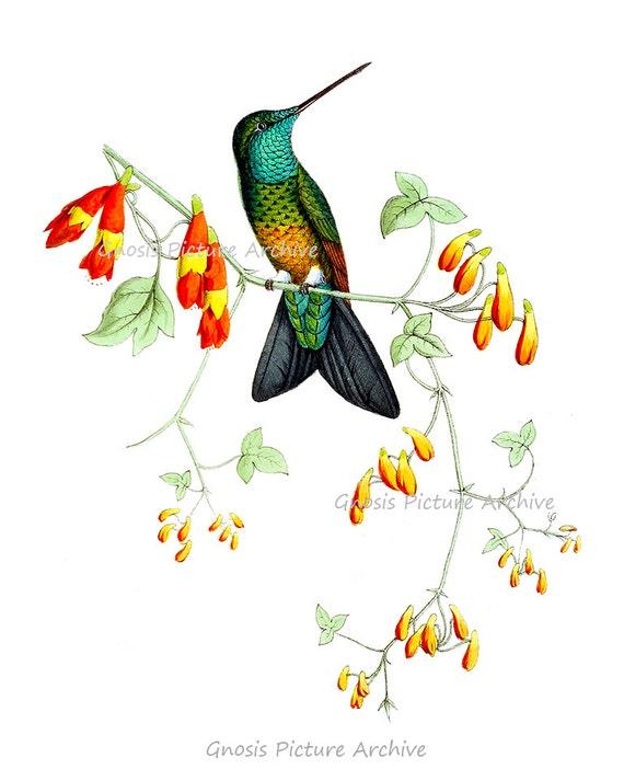 gift for mom bird art prints hummingbirds print set of 4 hummingbird art botanical wall art print victorian art old prints gnosis