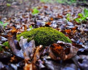 Nature Photography, Botanical Photography, Moss Photography, Minneapolis Photography