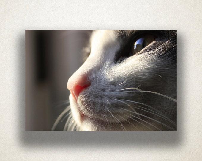 Cat Profile Canvas Art, Cat Wall Art, Animal Canvas Print, Cat Close Up Wall Art, Photograph, Canvas Print, Home Art, Wall Art Canvas