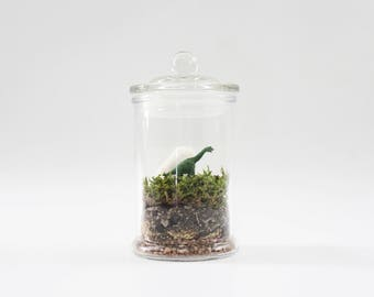 Dinosaur Moss Terrarium DIY Kit