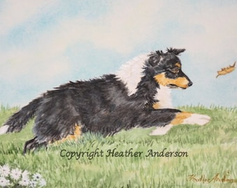 "Shetland Sheepdog tricolor Pup, ""Wind Runner"",  original 5 x 7 painting,  watercolor, Heather Anderson dog artist"