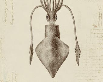 Humboldt-Kalmar auf französischen Ephemera Drucken 8 x 10 P193