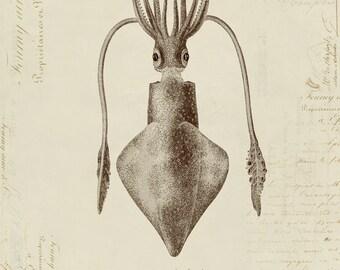 Humboldt Squid on French Ephemera Print 8x10 P193