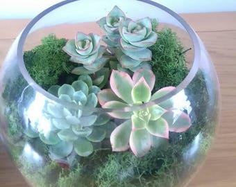 Large Glass Succulent/Cacti TerrariumBowl Kit