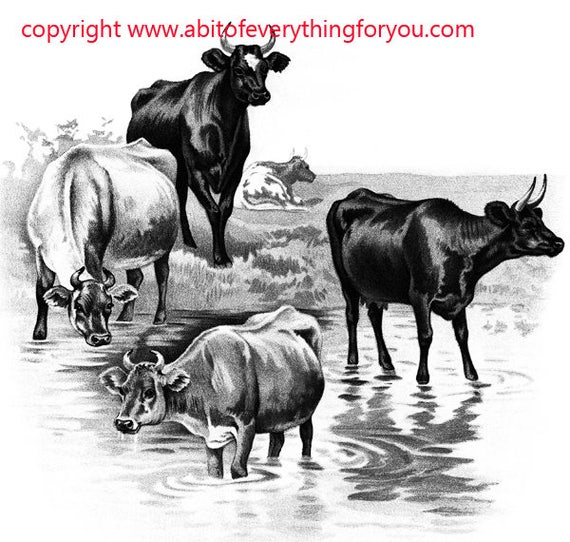 cows bovine printable animal art clipart png download digital vintage image graphics farm ranch black and white artwork