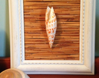 Rustic framed seashell with bamboo backdrop