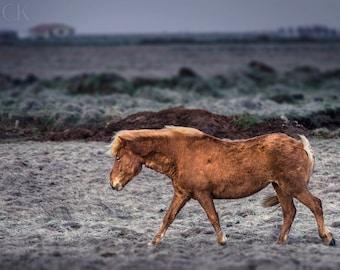 Icelandic Horse Photography, Landscape, Wall Art Print, Fine Art Photography, Nature Photography, Animal Photography