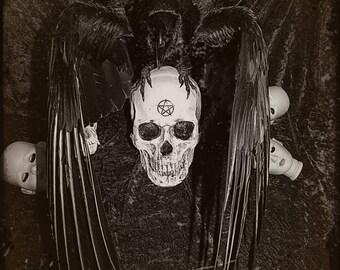 Taxidermy crow on skull. Horror Gothic creepy