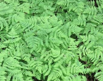 Placemat semi-rigid plastic original picture background green ferns ref T21