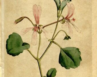 Flower print art, Nature decor, Antique print, Flower art, Vintage print, Vintage poster, 103