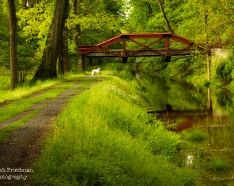 Delaware Canal and Towpath in Spring, Landscape Photograph, Bucks County, Pennsylvania, Path, Morning, Reflection, Rustic, Home Decor, Dog