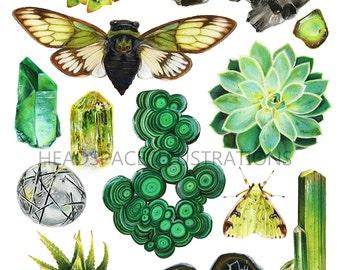 Green Crystal Quartz Succulent Flora Fauna Moth and Cicada - Botanical Art Print by Headspace Illustrations