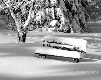 Winter Morning, Canada,Scarborough, wall art, scenery, Christmas, park bench, bird house, snow, black and white, home office decor
