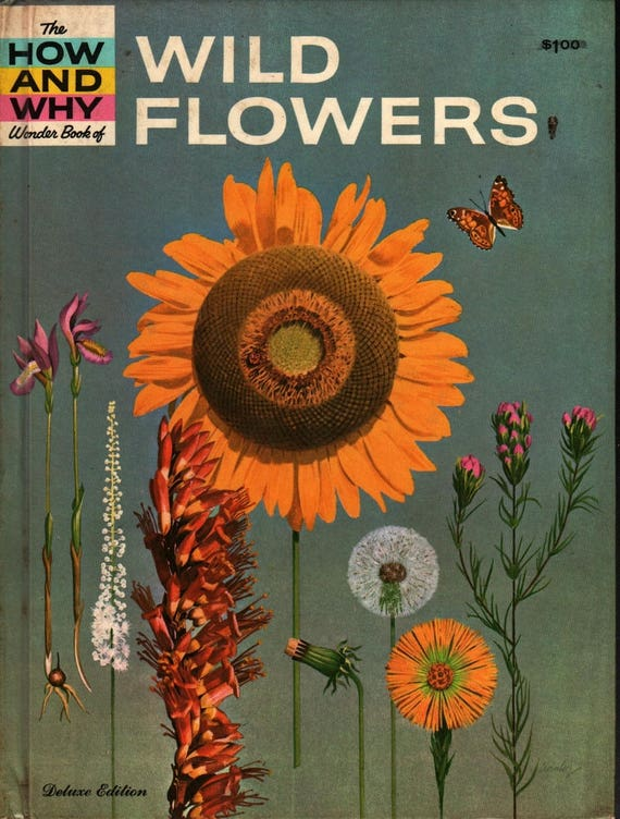 The How and Why Wonder Book of Wildflowers Deluxe Edition + Grace F. Ferguson + Cynthia Iliff & Alvin Koehler + 1962 + Vintage Kids Book