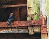 Swallow on Rusty Hinge //...