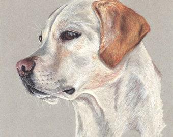 Print: Yellow Labrador Retriever