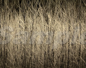 River Willows