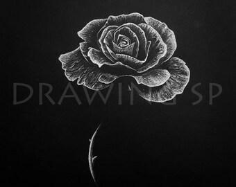 Rose - Illustration