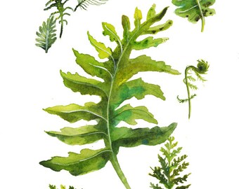 Fern Specimens - print of original watercolor
