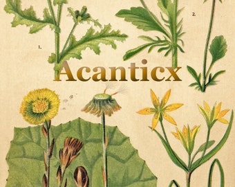 AC10018 Antique original lithography 1918 garden flowers herbs flora botany groundsel coltsfoot pansy chromolithography