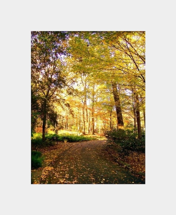 Yellow Leaves Photo Autumn Wall Art Woodland Photograph