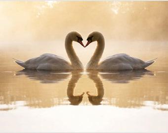 Lovely Swan Pair On Lake Poster Heart-shaped Necks Pristine Regal 24x36