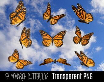 9 Transparent PNG Beautiful Yellow Monarch Butterfly Insect Fairytale Wings - Photoshop Photo Overlay for Photographers - Instant Download