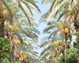 Avenue of palm trees