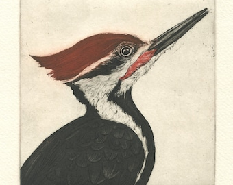 Pileated Woodpecker, Original Etching