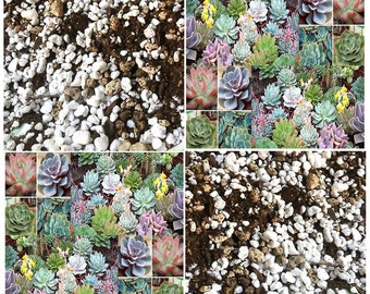 Cactus Succulents Soil Mix - By The Quart - Your Cacti and Succulent Will Be Very Happy