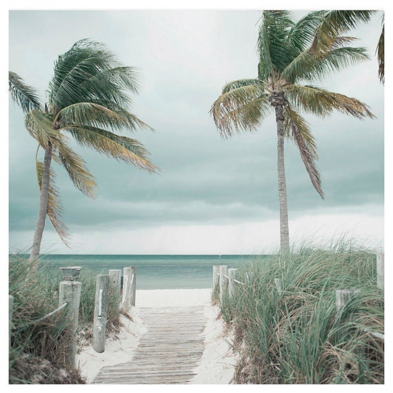 Landscape, Fine Art Photography, Coastal, Home Decor, Wall Art, Cottage, Palms, Seashore Print, 8x8 and larger