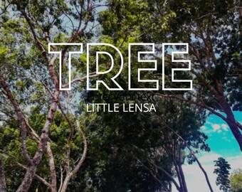 Tree Photo Digital Download
