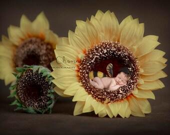 digital backdrop , background  newborn boy or girl sunflower bee