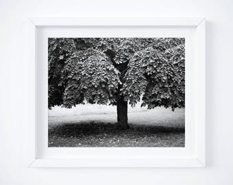 Black and white art print - Germany country photos - Classic wall decor - Minimalist photography -  German fine art tree photo prints