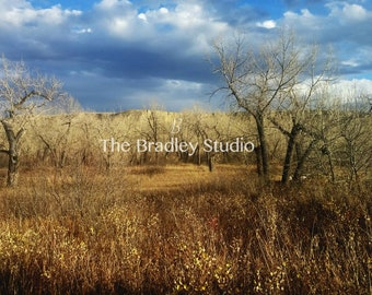 Landscape Photography, Nature Photography, Wall Art, Fine Art Print - Fall Forest