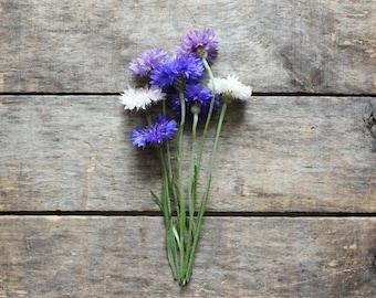 Bachelor Button Seed Mixture, cornflower seed, organic seeds, heirloom seeds, organic gardening, flower seeds, open pollinated, gardener