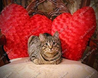 Cute Tabby Kitty Daisy Cat Kitten & Hearts Sweetheart Pillows Valentine Fine Art Photography Photo Print